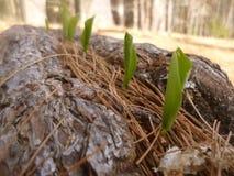 Строка весны Стоковое фото RF