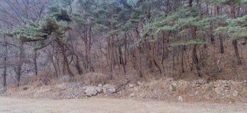Строка вечнозеленых деревьев на крае лиственного леса Стоковые Фотографии RF