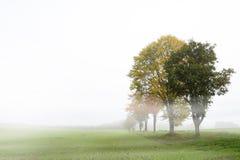 Строка дерева с листьями осени на туманном поле против светлого gra Стоковые Изображения RF