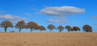 Строка деревьев на горизонте стоковые изображения rf