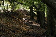 Строка дерева в осени Стоковое Изображение