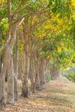 Строка дерева в парке Стоковое Изображение
