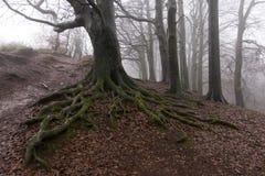 Строка дерева в тумане Стоковое фото RF