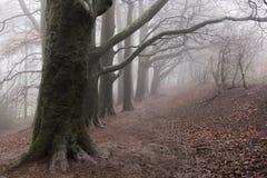 Строка дерева в тумане Стоковое Изображение RF
