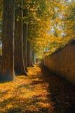 Строка деревьев падения Стоковая Фотография RF