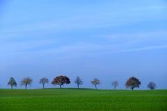 Строка деревьев, поле с зеленой травой, голубым небом, космосом экземпляра Стоковые Изображения RF