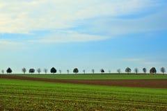 Строка деревьев Стоковое Изображение