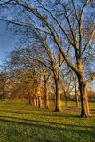 Строка деревьев Стоковое Изображение RF