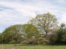 Строка зеленых листанных деревьев вдоль стороны обрабатываемой земли луга Стоковые Фотографии RF