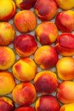 Строка зрелых нектаринов Стоковые Фото