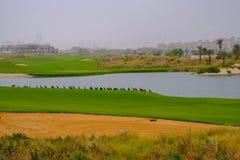 Строка зрителей утки кряквы наблюдая гольф на гольфе Co Saadiyat стоковые изображения rf