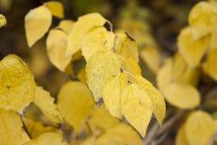 Строка листьев Стоковые Изображения RF