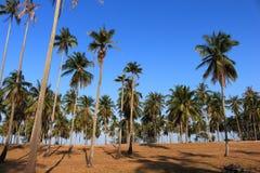 Строка лист зеленого цвета кокосовой пальмы и голубого неба Стоковые Фотографии RF