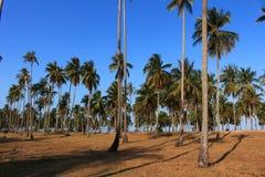 Строка лист зеленого цвета кокосовой пальмы и голубого неба Стоковое Изображение