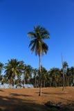 Строка лист зеленого цвета кокосовой пальмы и голубого неба Стоковая Фотография RF