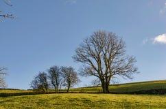Строка лиственных деревьев в зиме Стоковые Фотографии RF