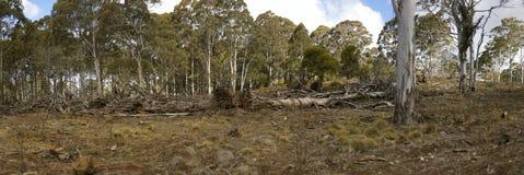 строка прерванного tree&#x27 спуска, освобоженного и сгребенного бульдозером; s стоковое фото rf