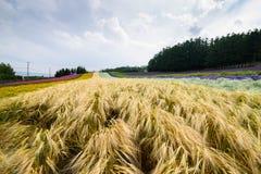 Строка различного завода земледелия в Саппоро Стоковые Фото