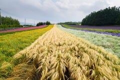 Строка различного завода земледелия в Саппоро Стоковые Фотографии RF