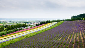 Строка различного завода земледелия в Саппоро Стоковые Изображения RF