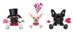 Строка собак валентинок в влюбленности Стоковое Изображение