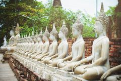 Строка статуи Будды белого цемента с солнечным светом на Wat Yai Chai Mongkol, Phra Nakhon Si Ayutthaya, Таиланде Красивый истори стоковые изображения