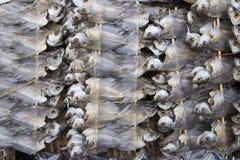 Строка сухих рыб Высушите рыб для зажаренный для еды Консервация еды внутри стоковая фотография rf