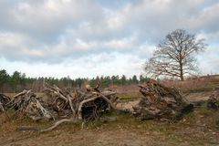 Строка с большими выкорчеванными пнями дерева на переднем плане natur стоковые фотографии rf
