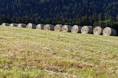 Строка тележки сена Стоковые Фото