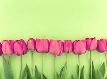Строка тюльпанов на зеленой предпосылке с космосом для сообщения Стоковые Фото