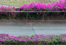 Строка цветка бугинвилии Стоковые Фото