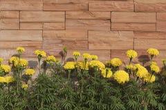 Строка цветков ноготк Стоковая Фотография