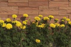 Строка цветков ноготк Стоковое Изображение