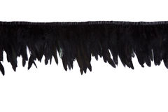 Строка черных декоративных пер Стоковые Изображения RF