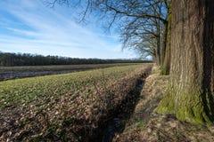Строка чуть-чуть дерева около поля в wintertime Стоковые Изображения RF