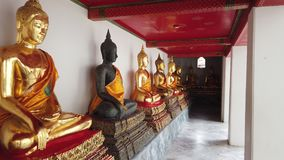 строка 4K золотых статуй Будды на Wat Pho сток-видео