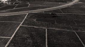 Строки виноградника перед сбором Стоковое Изображение
