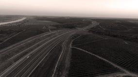 Строки виноградника перед сбором Стоковая Фотография