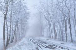 Строки дерева и дорога сельской местности в заморозке Стоковая Фотография RF