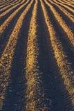 Строки делают по образцу в вспаханном поле Стоковая Фотография RF