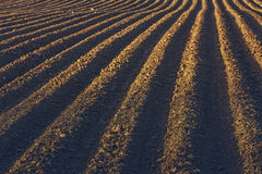 Строки делают по образцу в вспаханном поле Стоковые Изображения