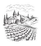 Строки заводов и замка виноградины виноградника иллюстрация вектора