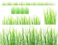 Строки зеленой травы Стоковые Фотографии RF
