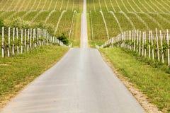 Строки молодых виноградин в сельской местности Стоковые Изображения RF