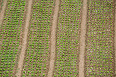 Строки на поле Стоковое Изображение RF
