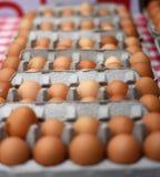 Строки органических яичек Брайна больших Стоковые Изображения RF