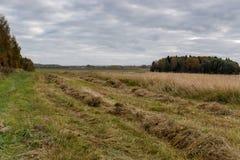 Строки отрезанной травы на краю поля Стоковые Фотографии RF