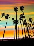 Строки пальмы захода солнца Калифорнии в Санта-Барбара Стоковое Изображение RF