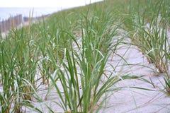 Строки травы дюны на пляже Стоковое Изображение RF