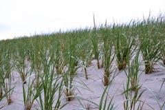 Строки травы дюны на пляже Стоковое Изображение